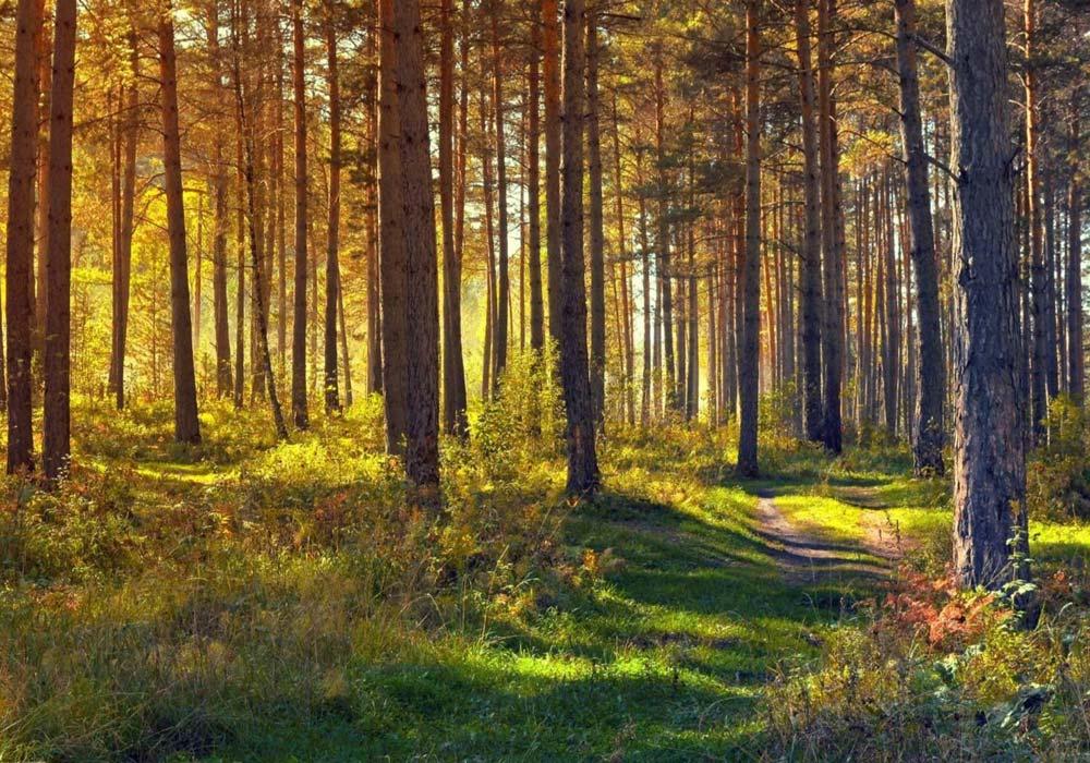 Waldbaden und seine 10 positiven Auswirkungen auf deinen Körper